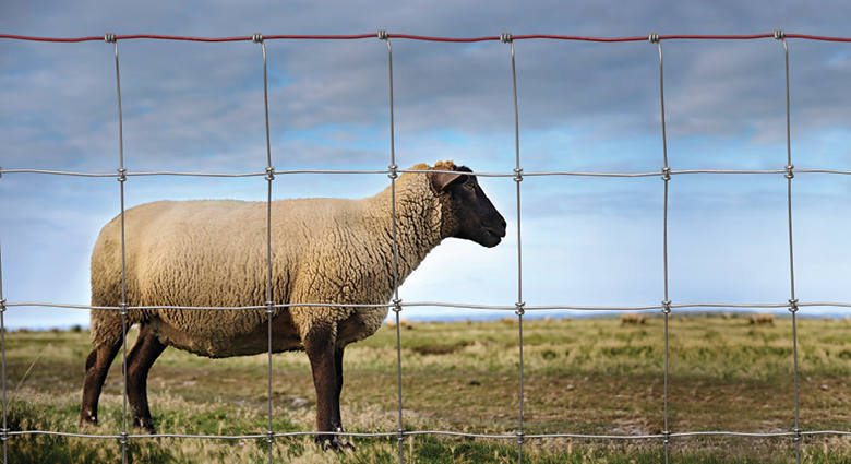 Keep Sheep & Goats Safe With Proper Fencing