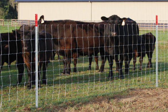 Field Fence for Livestock