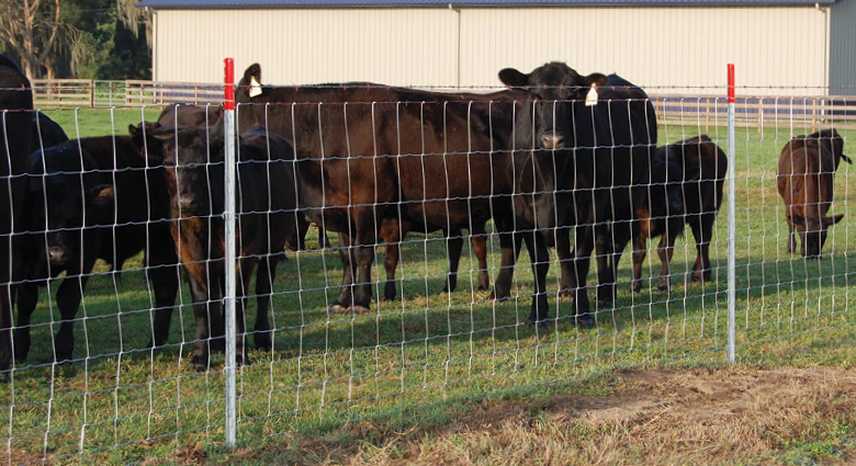 Field Fencing For Livestock Contain Livestock With Red